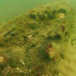 Ученые нашли древний лес на дне моря