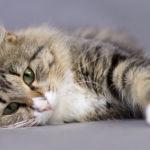 Ученые признали просмотр видео с котиками полезным занятием