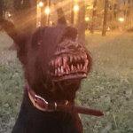 Намордник для выгула собак в темных парках и лесах